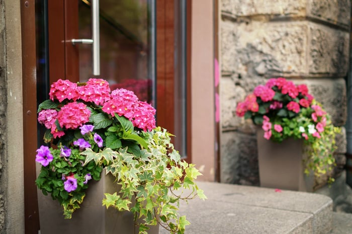 landscaping ideas for front doorstep