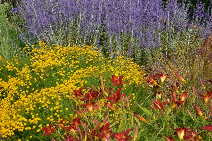 yellow red and orange plant combinaton