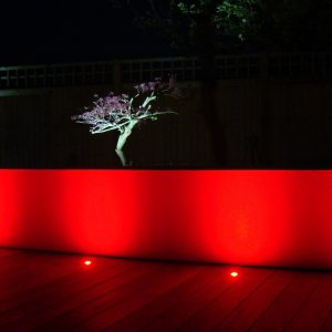 coloured garden lighting