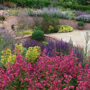 bee friendly plant combination in terraced garden