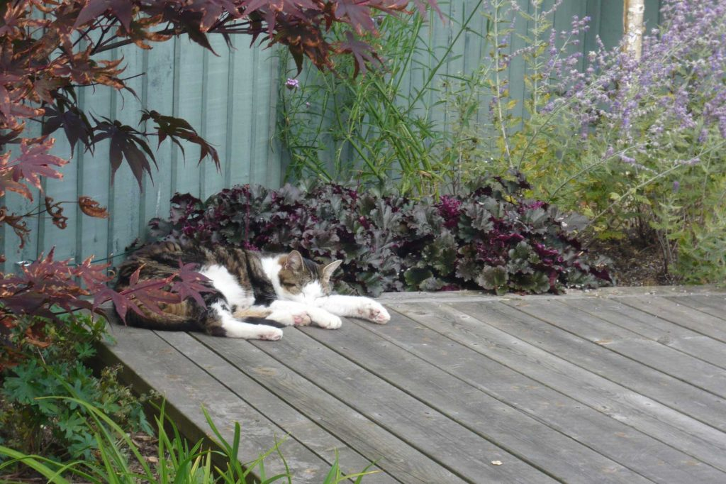 decking with cat