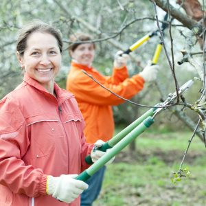 winter gardening jobs tree pruning