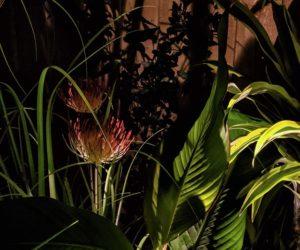 lighting for plants