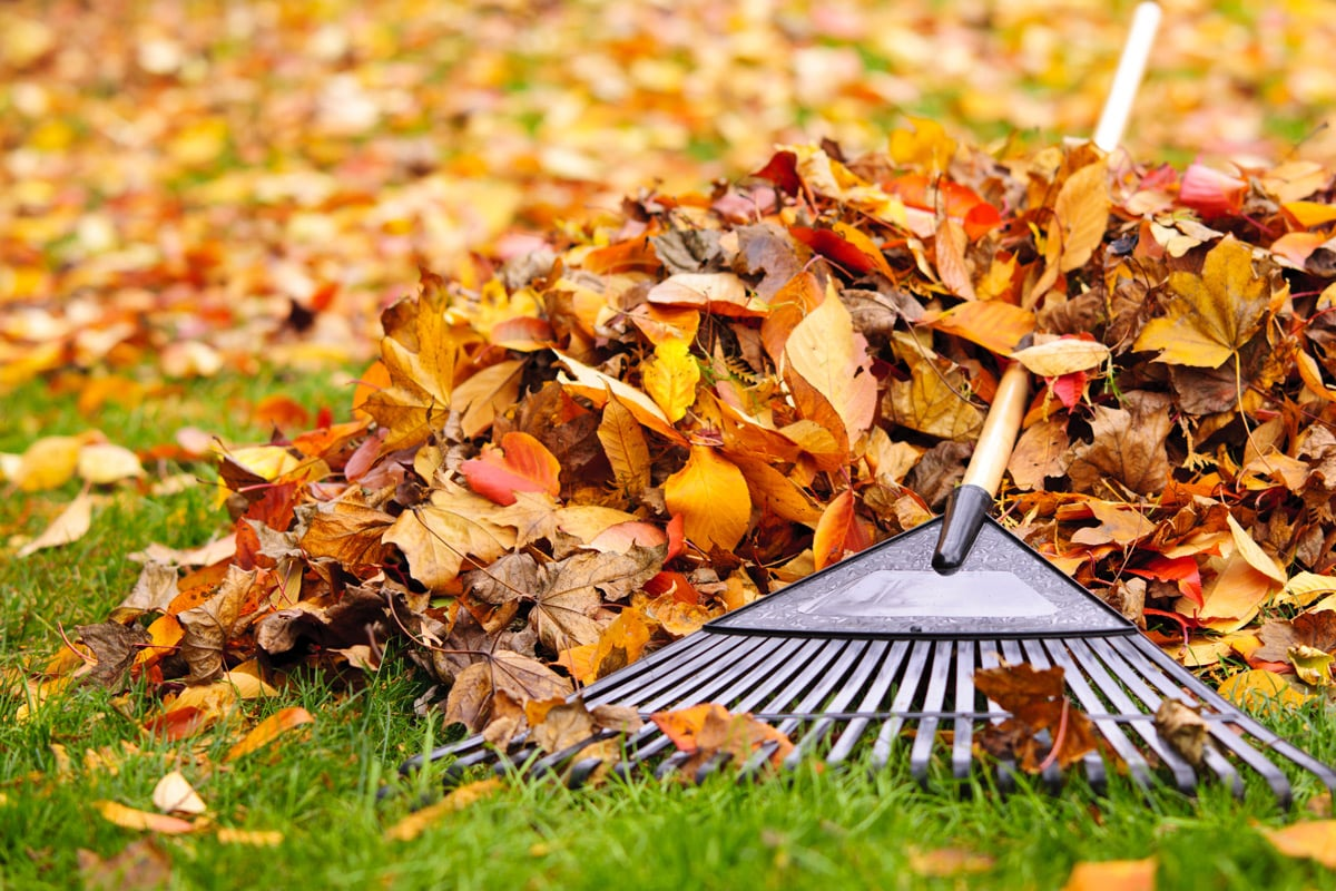 autumn lawncare
