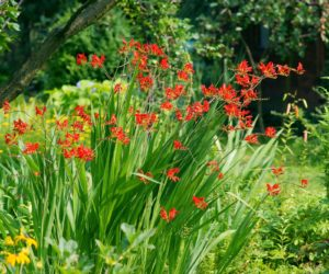 plants for rain gardens