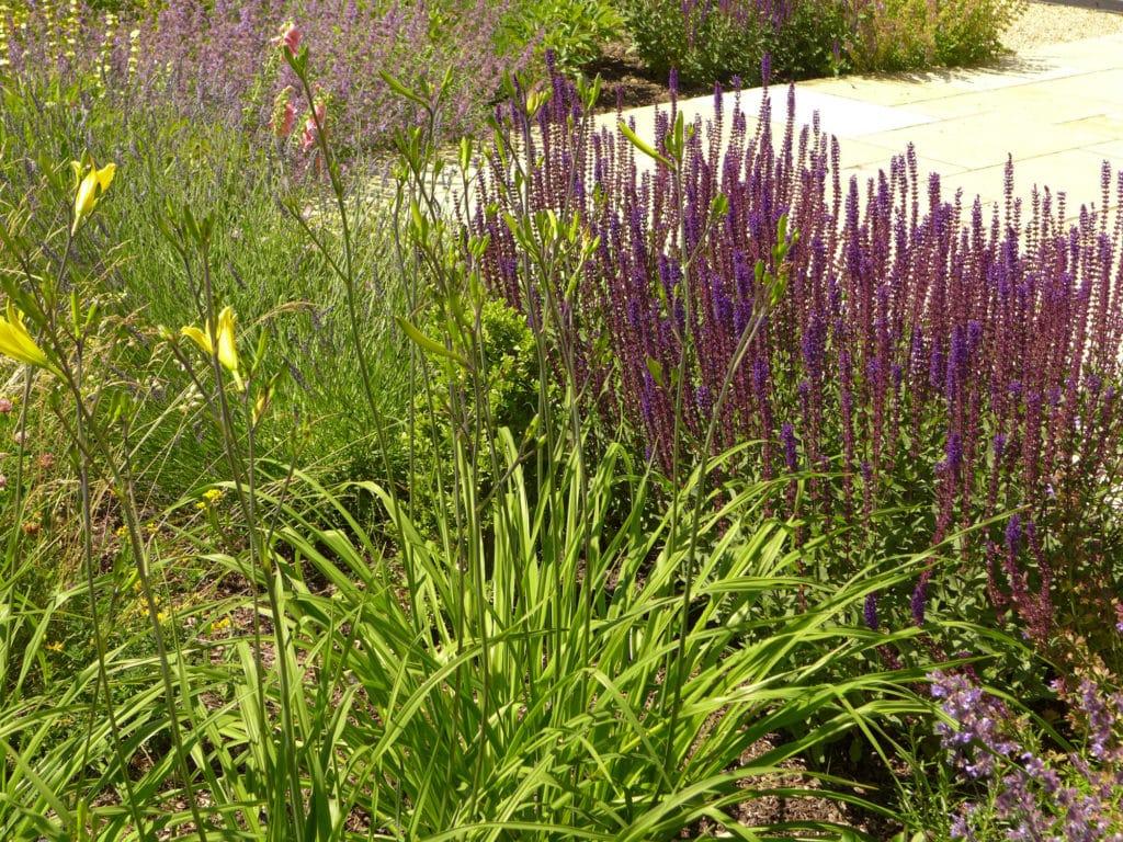 rain garden planting