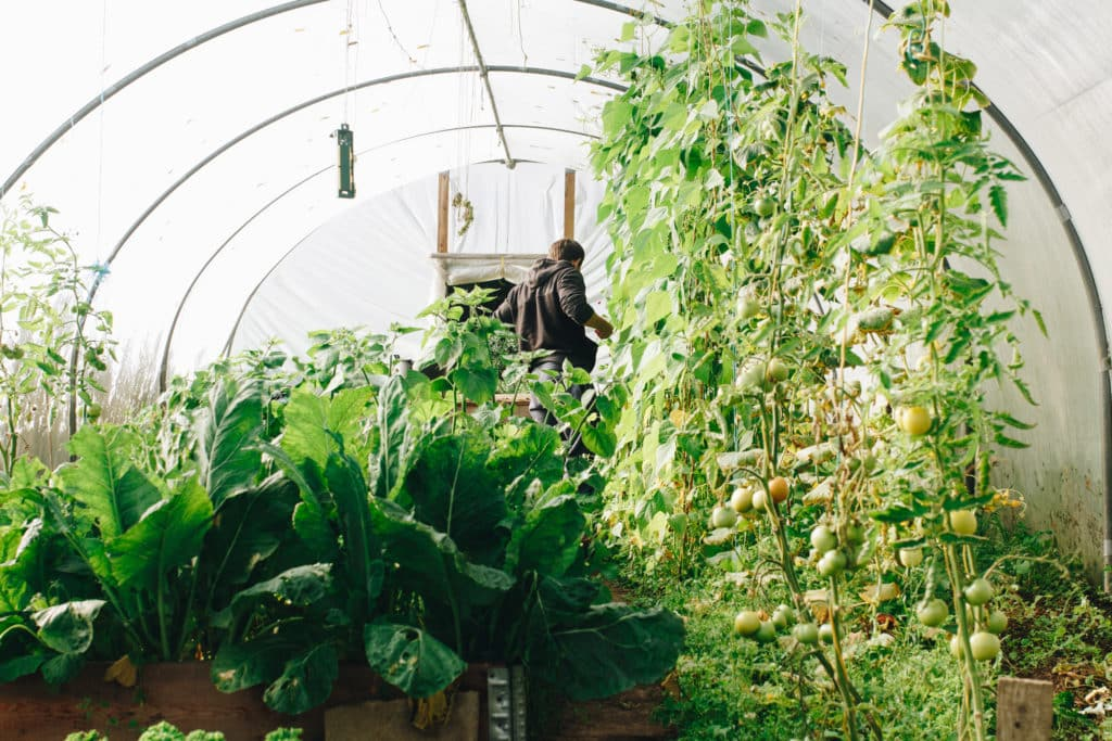 create a vegetable garden