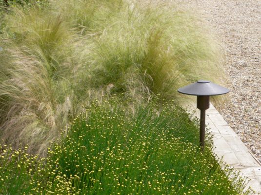 landscaping light fitting sitting neatly amongst plants beside a driveway