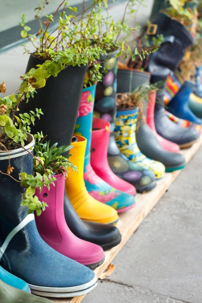 herb garden grown in boots