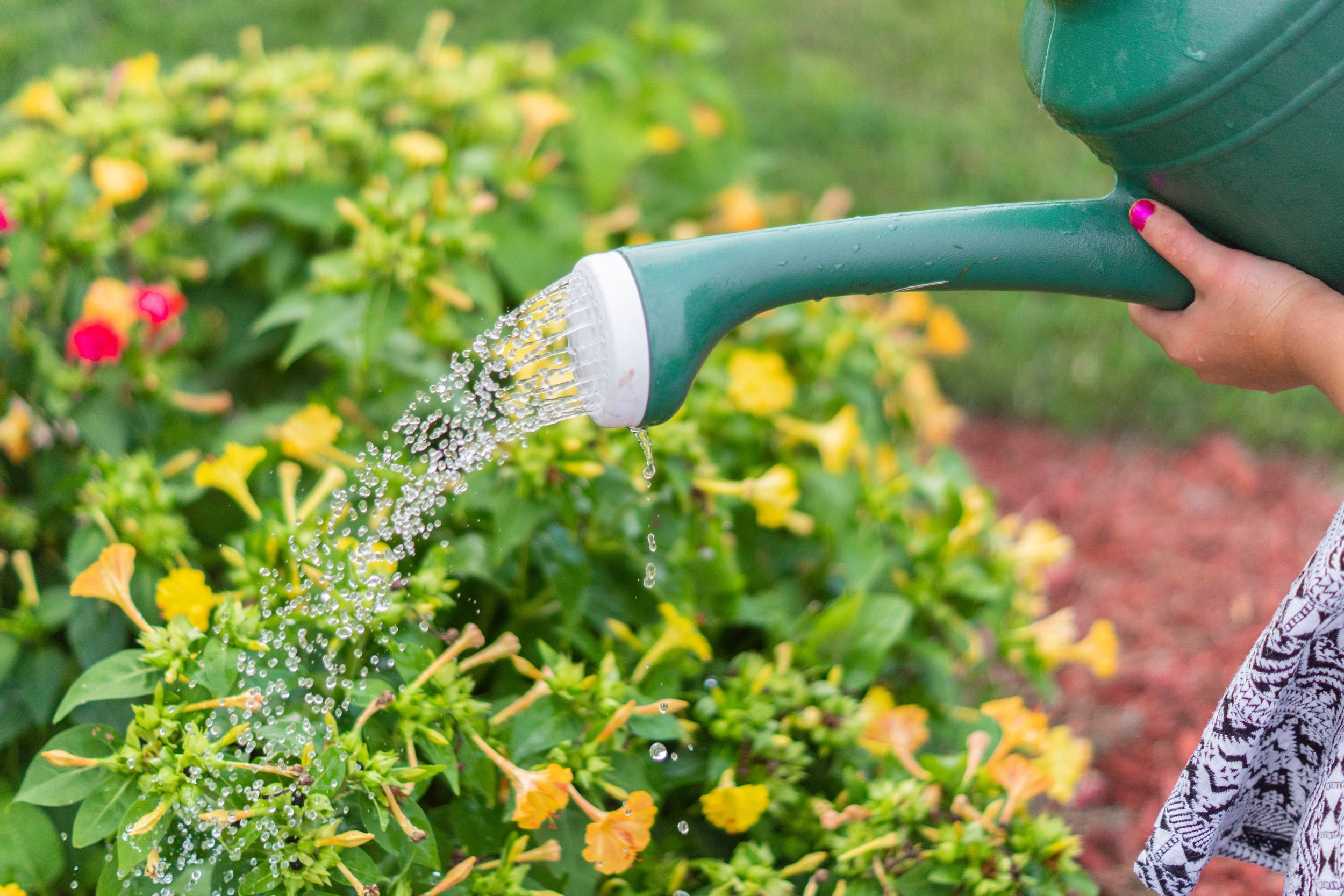watering the garden in summer