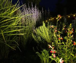selection of garden plants picked with lighting effects