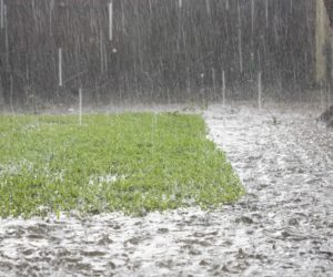 wet garden with soggy lawn