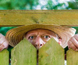 garden privacy man peeping through fence
